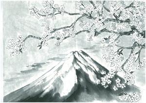 New Mt.Fuji and Sakura